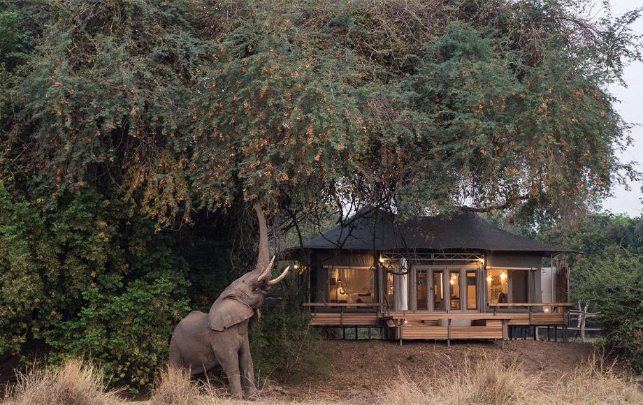 An elephant outside Chikwenya