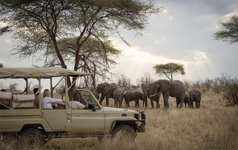 Herd of elephants during safari at Kigelia Camp in Tanzania