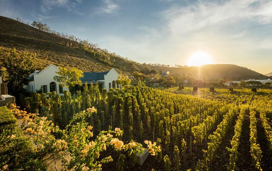 Beautiful vineyards at Luxury Leeu Estates