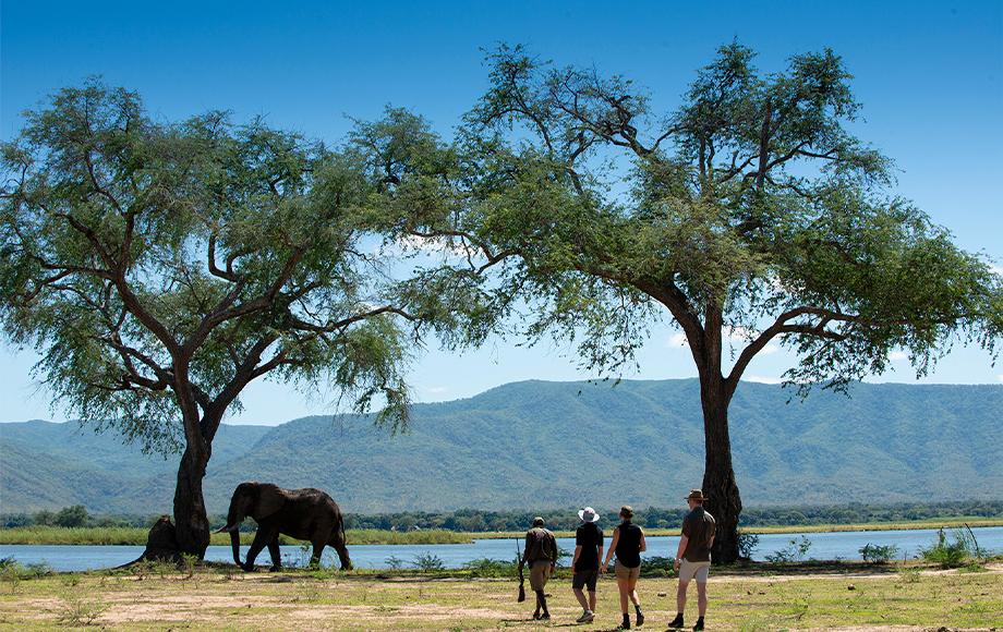 Walking safari encountering an elephant at Nyamatusi Camp at Mana Pools in Zimbabwe