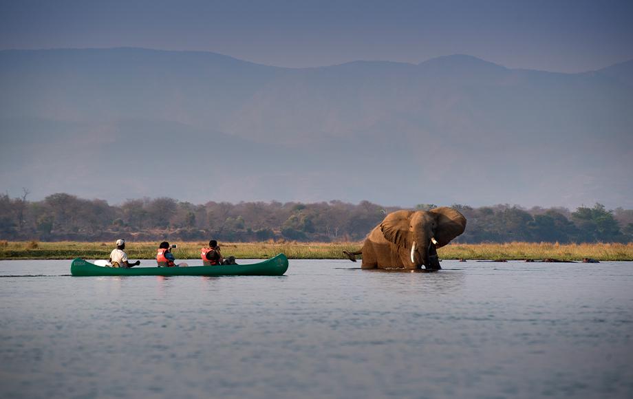Canoeing next to a big elephant on the Zambezi River at Nyamatusi Camp at Mana Pools in Zimbabwe
