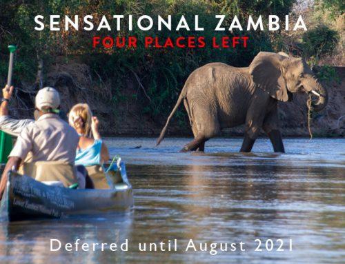Sensational Zambia