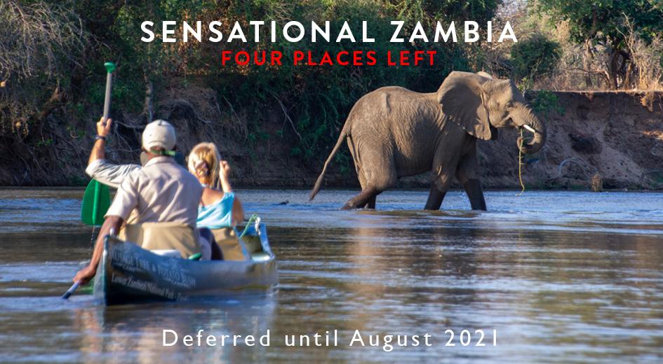 Elephant encounter while canoeing on the Zambezi River in Zambia