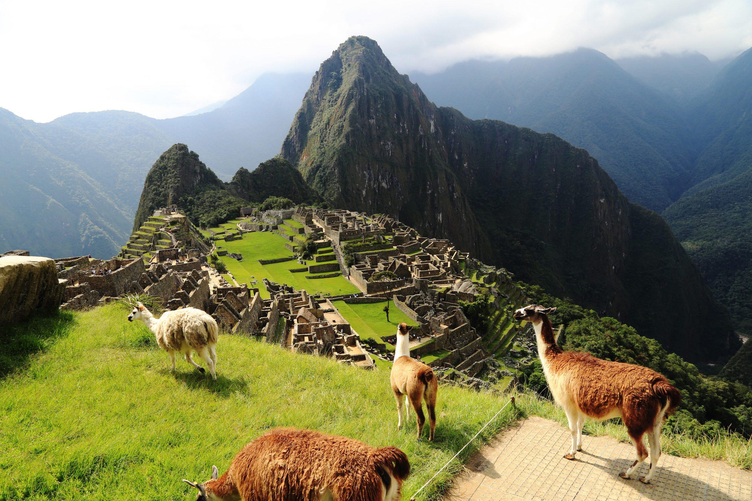 Alpacas on top of Machu Pichu