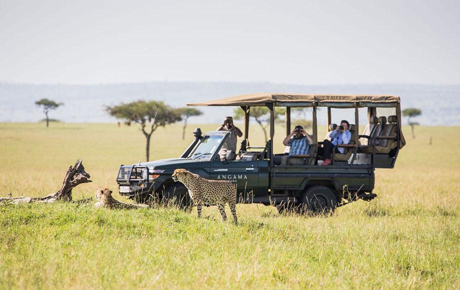 Safari Game Drive at Angama Mara in Kenya