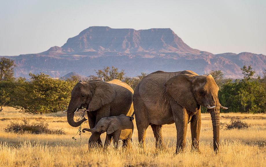 Herd of Elephants at Damaraland Camp