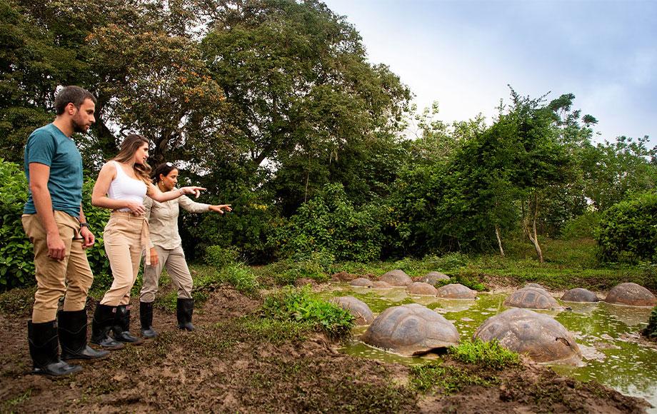 Galapagos Tours Giant Tortoises