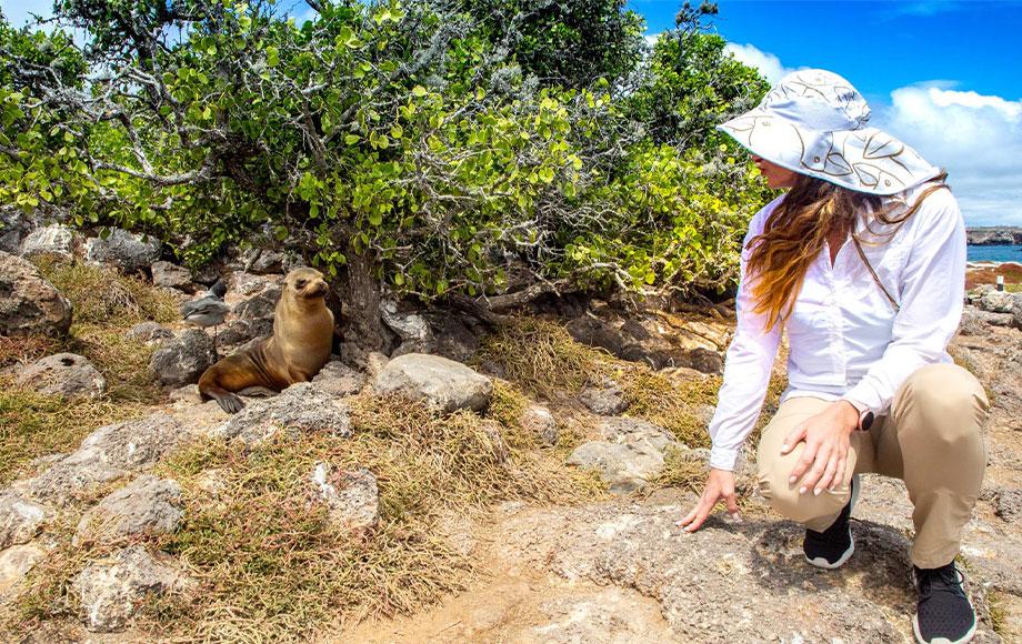 Baby Sea Lion Pup