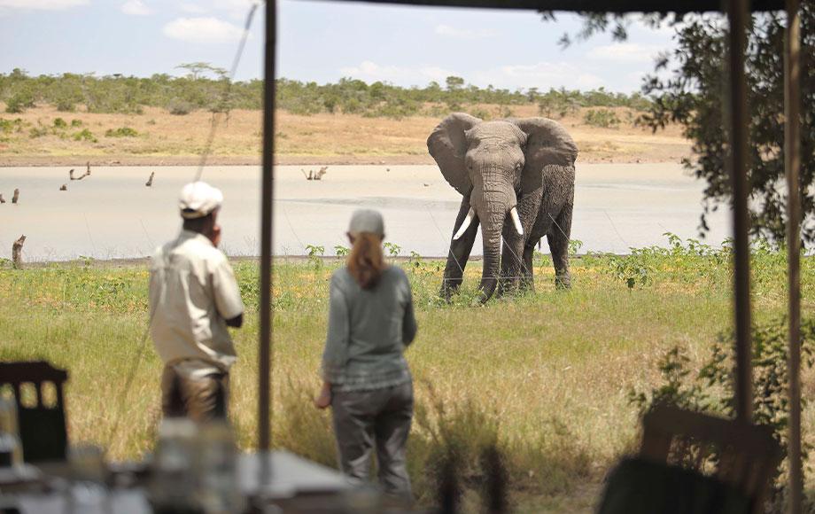 Elephant close to camp at Kicheche Laikipia