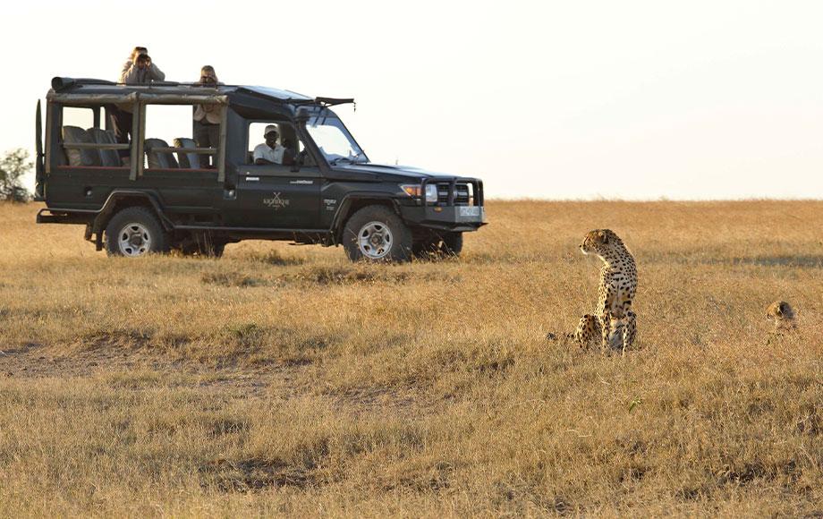 Cheetah and cub encounter during safari