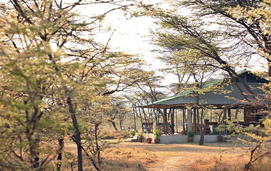 kicheche Bush Camp in Kenya
