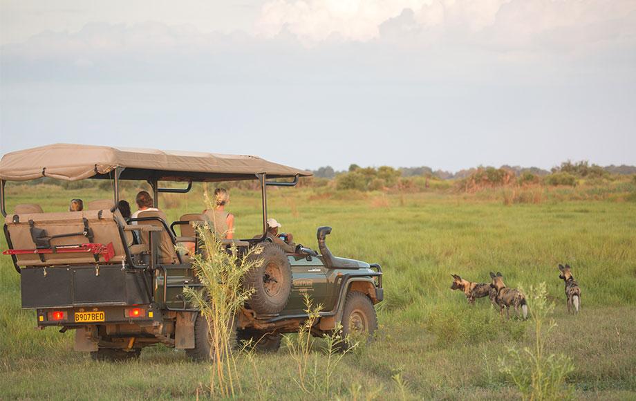 Safari Experience at Duba Plains Camp