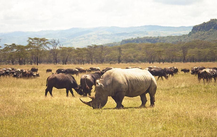 Mbweha Camp Rhino Safari