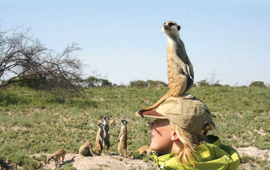 Meerkat on top of persons head