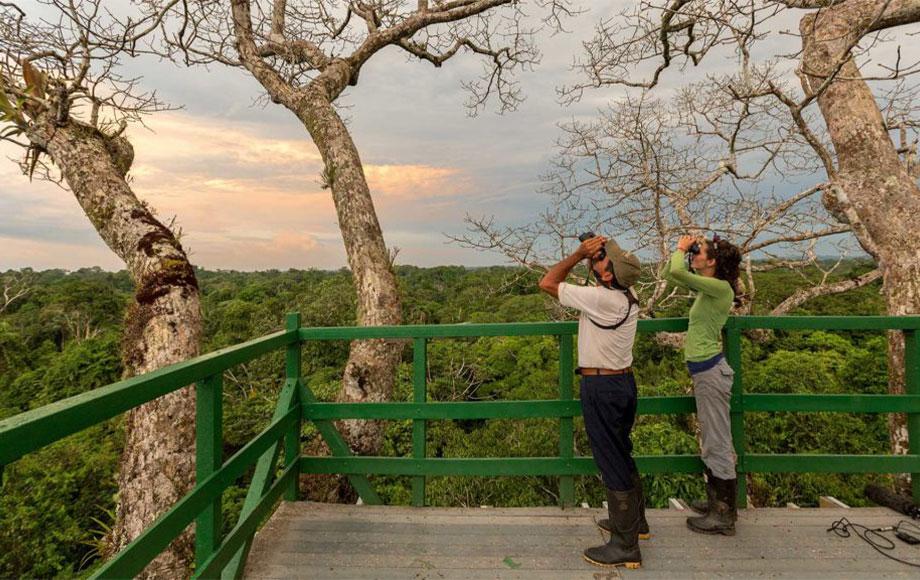Napo Wildlife Center Tree house