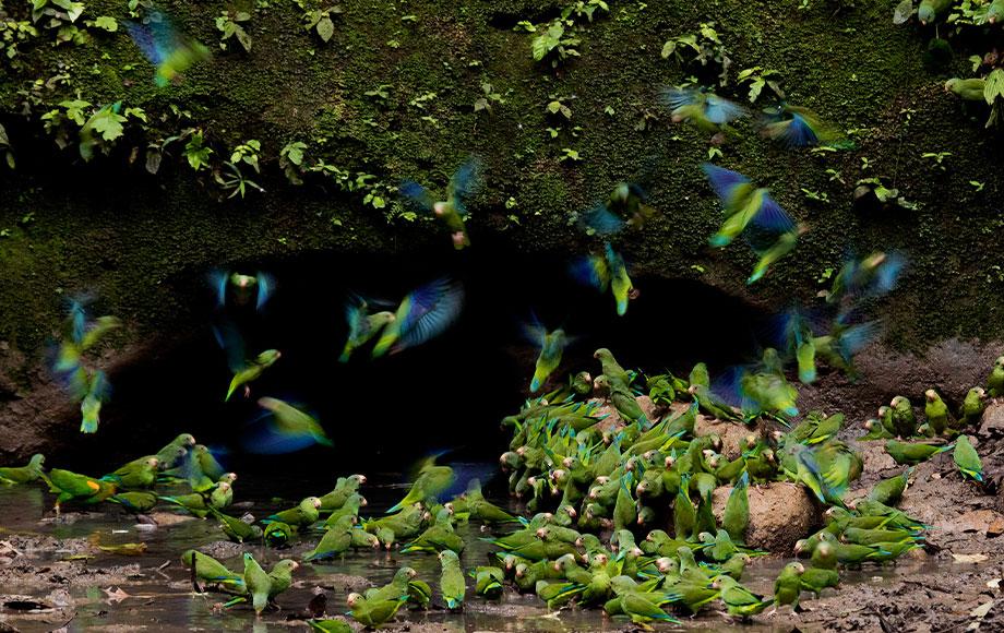 Birds at Napo Wildlife Center
