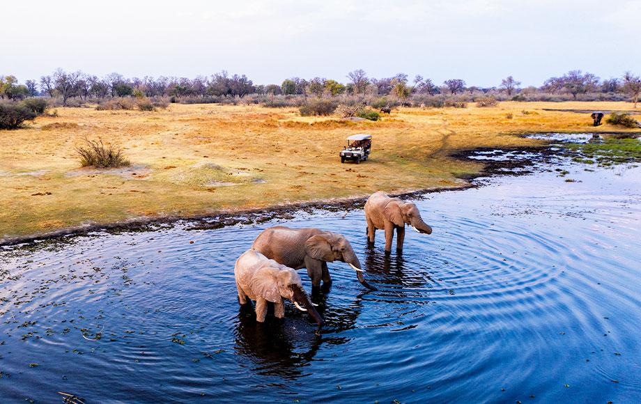 Elephant encounter on Safari