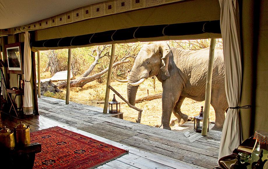 Elephant saying hello