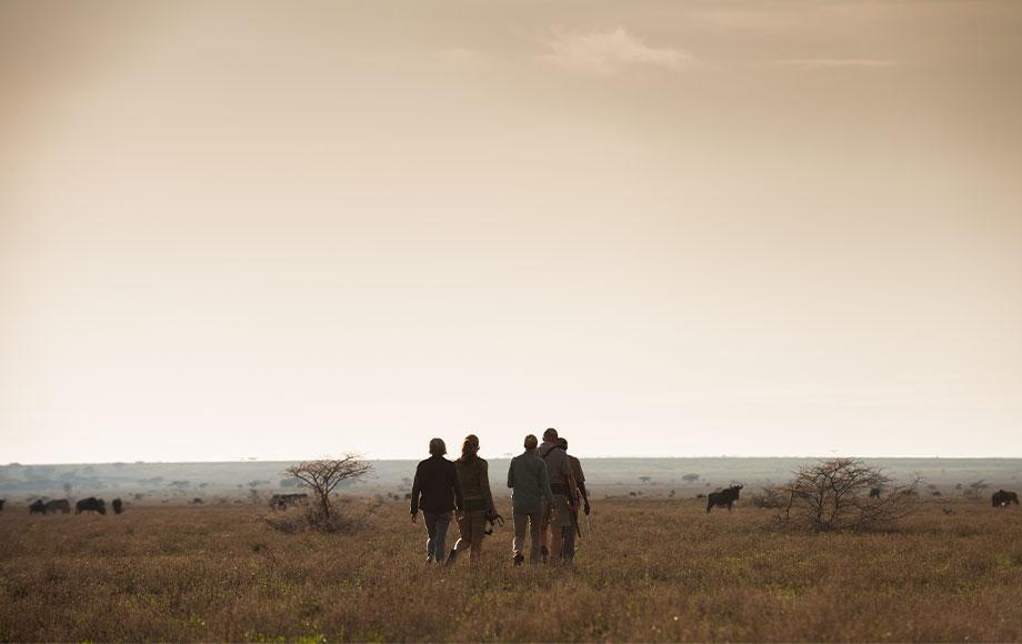 Walking Safari at Mwiba Lodge