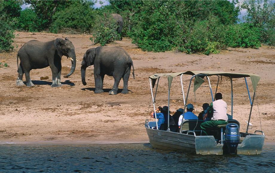 Encountering elephants