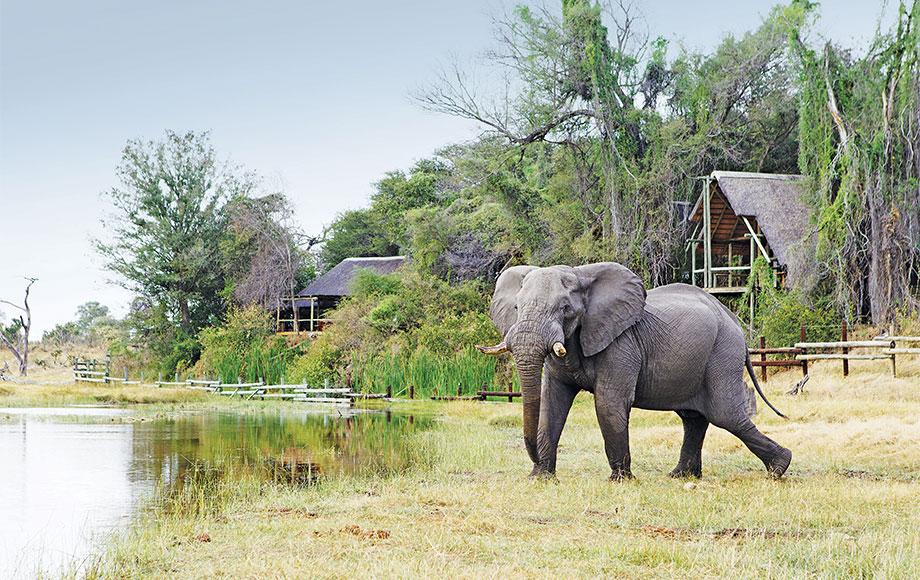 Elephant out the front of savute Safari Lodge