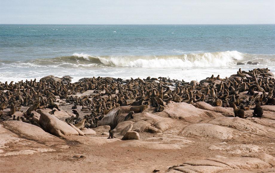 Mowe Bay Seal Colony