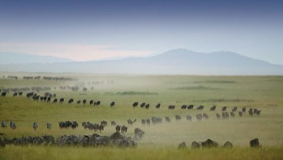 Masai Mara Safaris