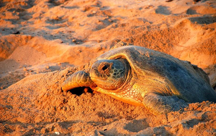 Raz Al Jinz Turtle Reserve