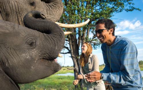 Elephant at Abu Camp in Botswana