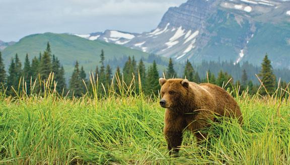 Alaska bear viewing lodges