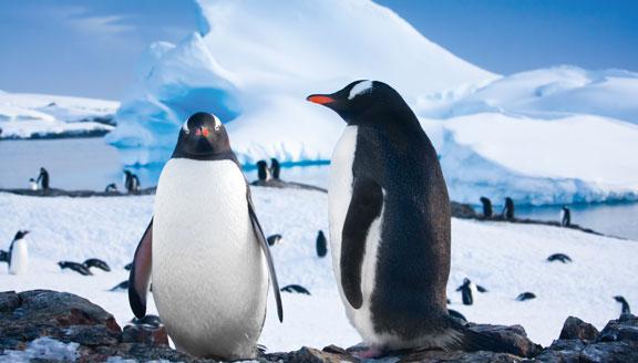 Antarctic Peninsula Cruises wildlife