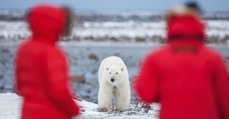 Polar Bear Viewing Safaris