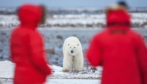 Arctic Land Expedition tours
