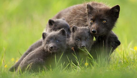 Russian Far East wildlife