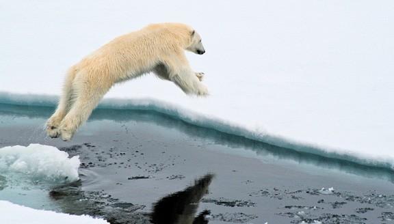 arctic2