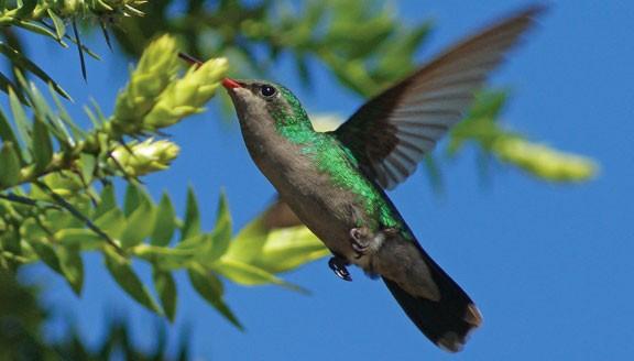 Argentina Eco-Lodges & Wildlife Tours