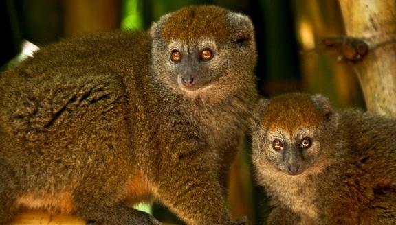 Madagascar 10 Day Tour
