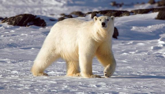 Epic High Arctic