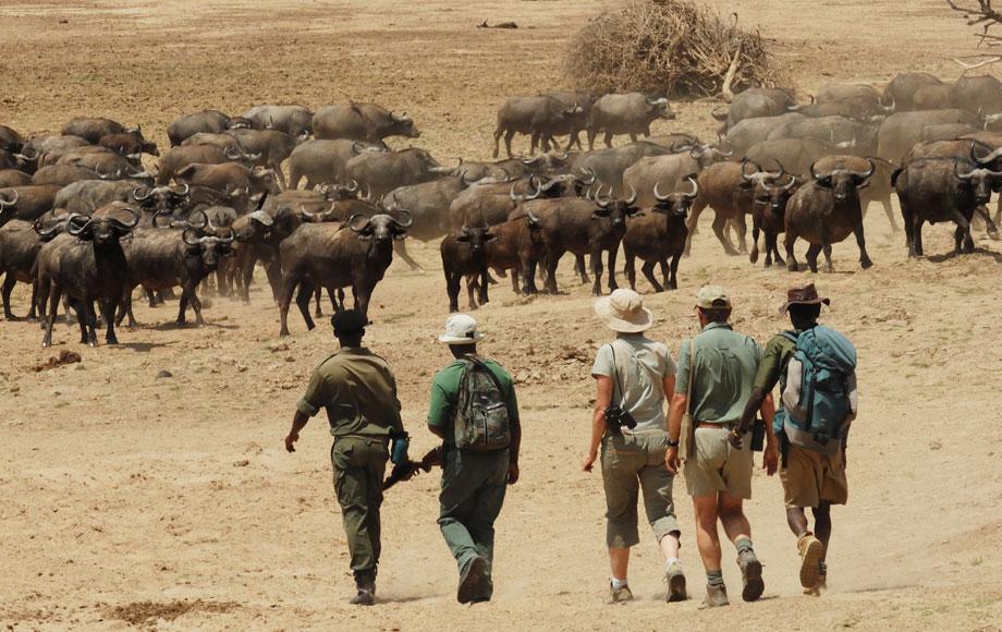 Walking safari at Chikoko Trails Camp