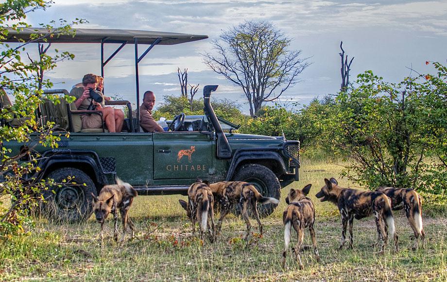 Safari at Chitabe Lediba in the Okavango Delta