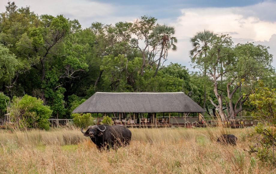 Chitabe Lediba in the Okavango Delta