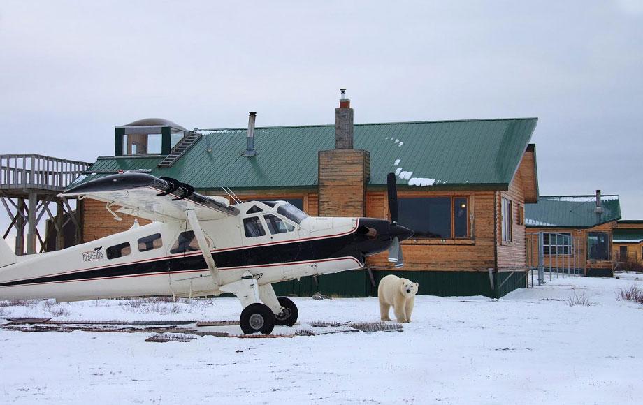 Polar bear viewing at Churchill Wild Dymond
