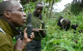 conservation-gorilla-fund