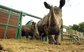 conservation-rhino