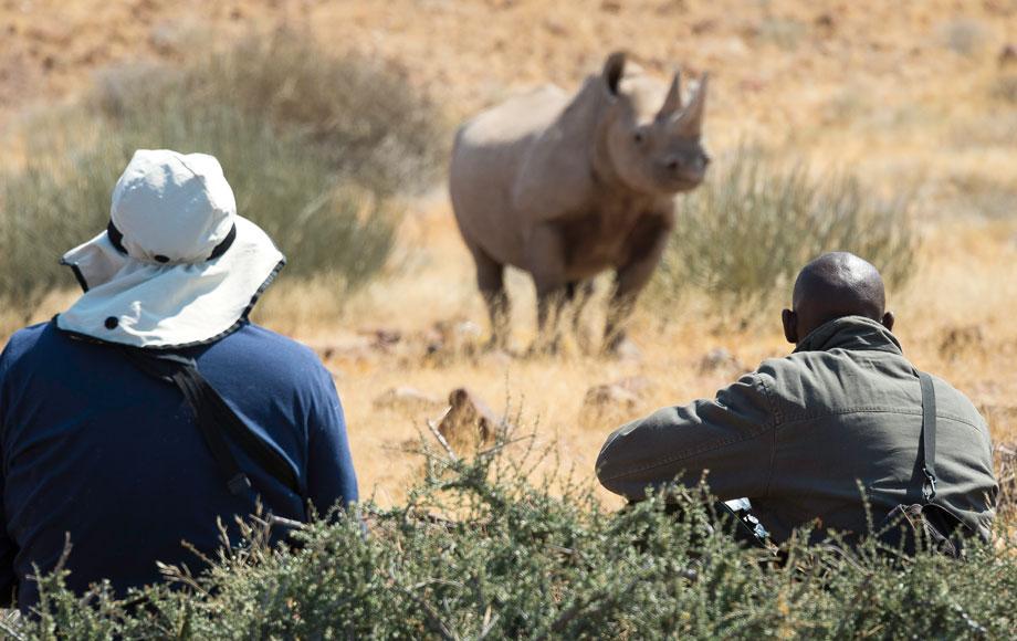 Rhino Sighting