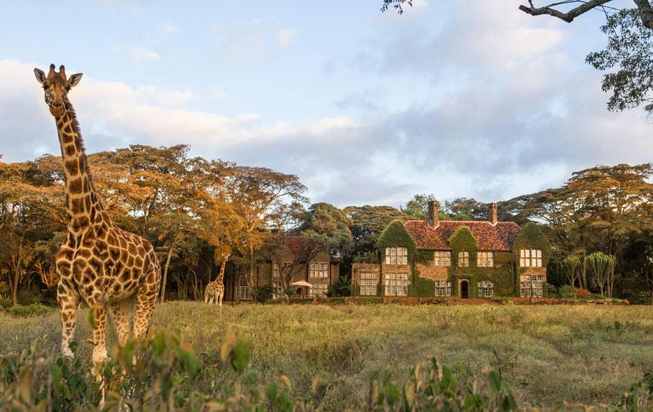 Giraffes at Giraffe Manor