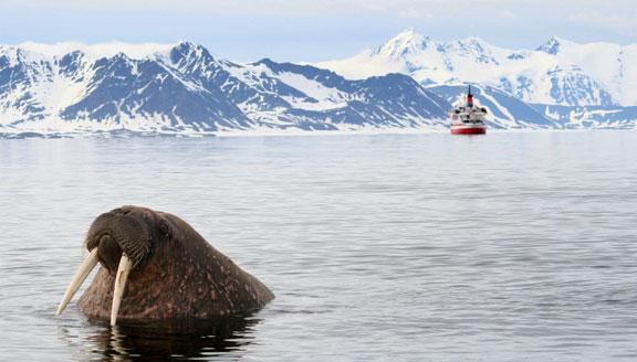 Spitzbergen Explorer