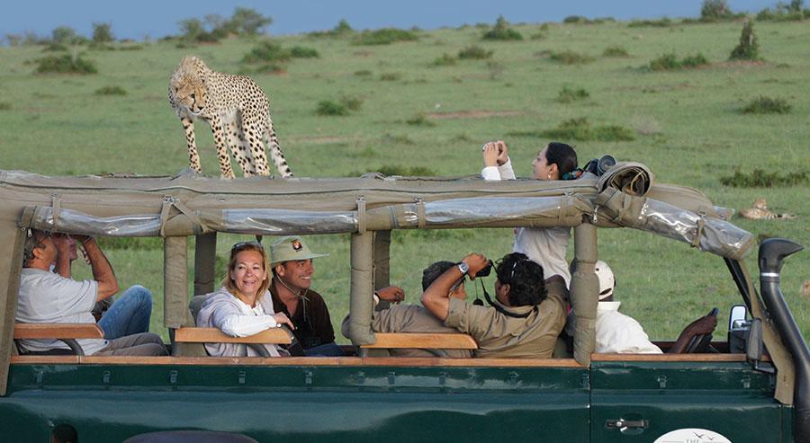Leopard on roof of safari vehicle in Kenya