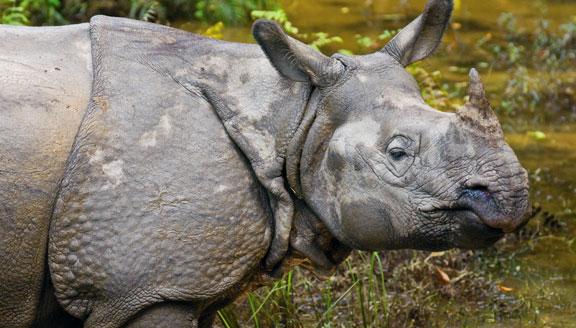 Safari in Chitwan National Park