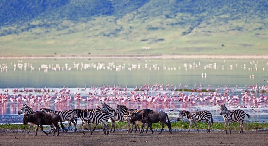 Zebra and flamingos in Kenya